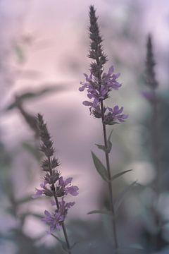 Sommerblumen im Pastell von Marianne Twijnstra-Gerrits