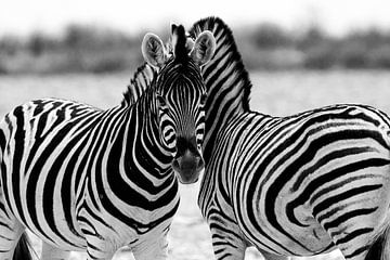 Zebras in Etoscha von Monique Landman