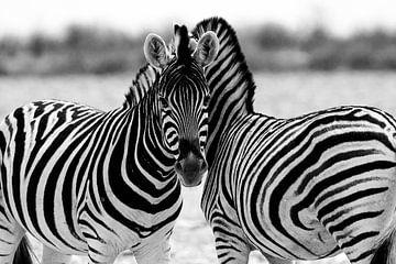Zebra's in Etosha van Monique Landman