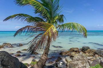 Palmboom op een paradijselijk eiland van Reis Genie