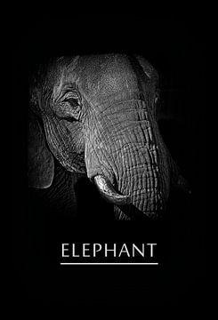 Elefant von Leopold Brix