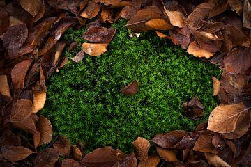 Scène de forêt, feuilles sur Thomas Kuipers