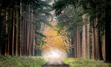 a forest 2 van Lex Scholten