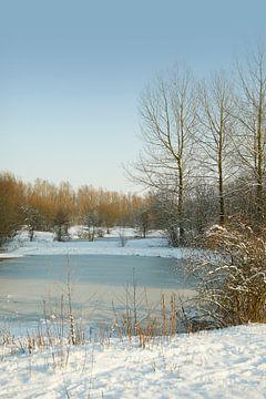 winter@zwevegem von Bart Colson