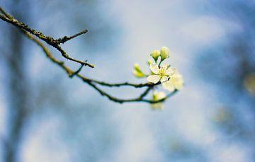 Blüte von Stephanie Kweldam-Beugelink