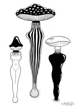 Symbiose von Benoit Vermaele