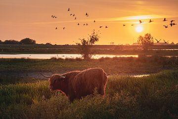 Schottische Highlander bei Sonnenuntergang von Marinus Engbers