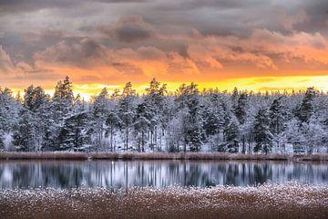 Kalter Winterwald am Wasser von Marc Hollenberg