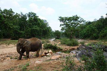 Indischer Elefant von Cora Unk
