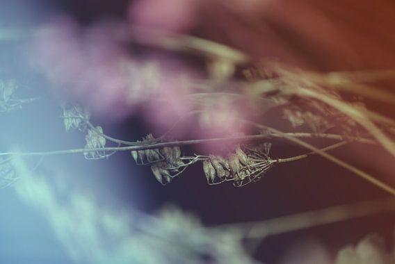 Floral-Abstrakt-1QF van Pia Schneider