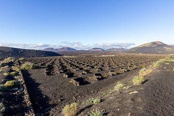 Weinbau in der Region La Geria auf Lanzarote von Reiner Conrad