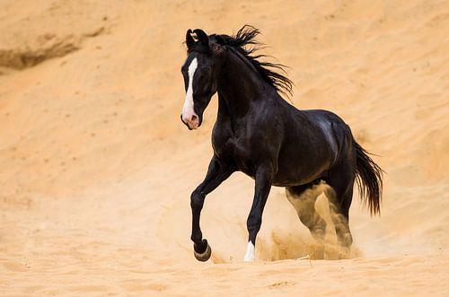 Marwari woestijn van