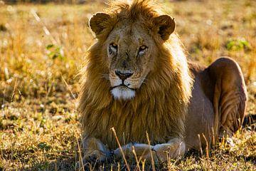 Rustende leeuw van Peter Michel