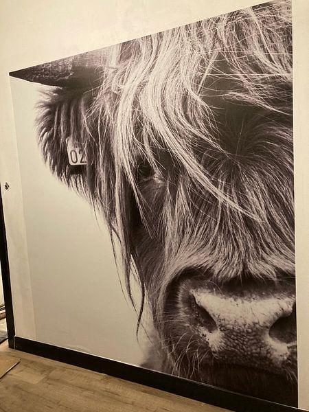 Kundenfoto: Portrait Scottish Highlander Schwarzweiss von Sandra van Kampen, auf nahtlose tapete