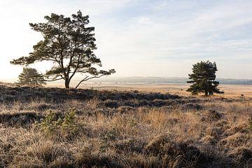 Weiter Blick über die Asselsche Heide von OCEANVOLTA