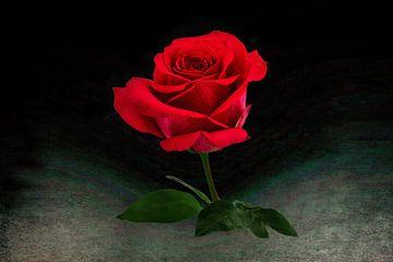 close-up van een helder rode roos met klein steeltje ,groene blaadjes en een vage achtergond van Rita Phessas