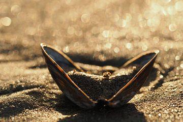 Schelp op het strand van de Opaalkust. van Astrid Brouwers