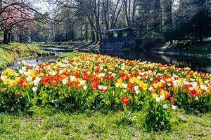 Frühlingstulpen van