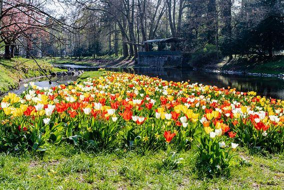 Frühlingstulpen van Heinz Grates