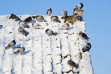 Duiven op een besneeuwd dak van Peter de Kievith Fotografie