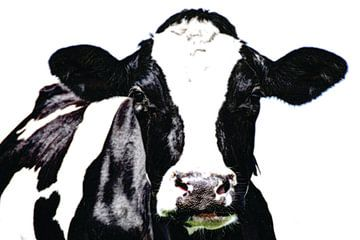 Schwarze und weiße Kuh auf der Wiese von Hendrik-Jan Kornelis