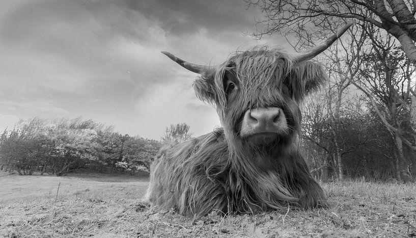Schotse Hooglander in Zwartwit van Menno Schaefer