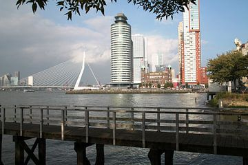 Rotterdam van Tineke Mols