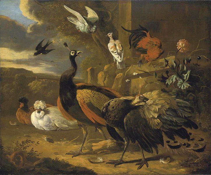 Pfauen, ein Hahn, Tauben, eine Schwalbe und andere Vögel in einer Landschaft, Melchior d'Hondecoeter von Meesterlijcke Meesters
