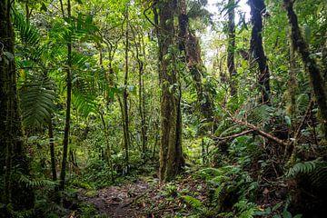Panamaischer Regenwald