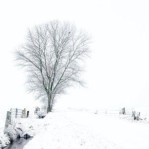 Witte wereld van