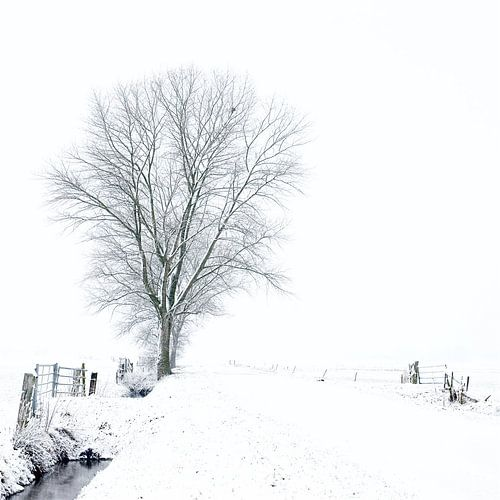Witte wereld