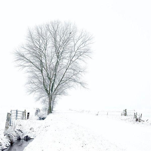 Witte wereld van Gerard Oonk