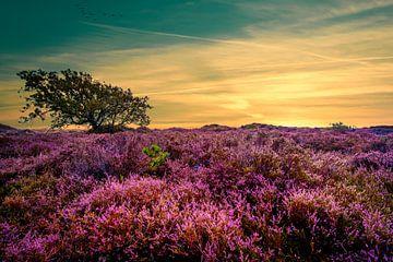 Eenzame boom van Peter Heins
