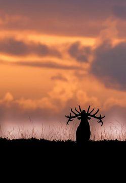 burlend edelhert bij zonsondergang van Dirk jan Duits