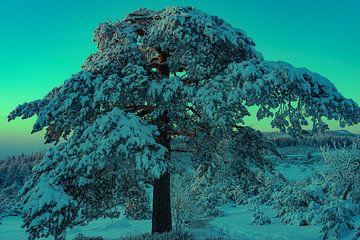 Besneeuwde boom in een winters berglandschap van André Post