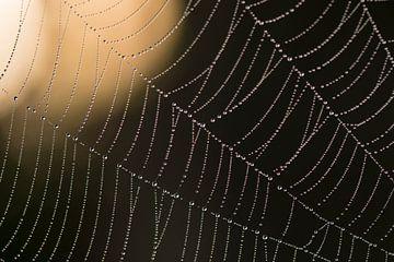 Waterdruppels in een spinneweb van Barbara Brolsma