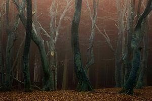 Speulderbos, het bos van de dansende bomen