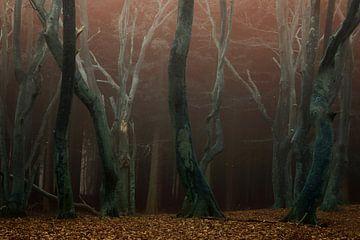 Speulderbos, het bos van de dansende bomen van Martin Podt