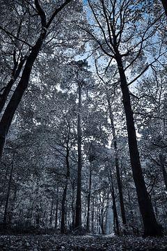 Frozen forest  van Fotografie Jeronimo
