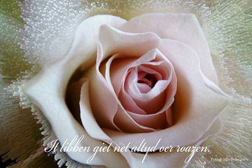 Roos - Roze Roos - Fryske spreuk -  van Fotografie Sybrandy
