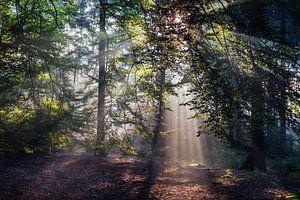 Zonnestralen in het Bos (2)