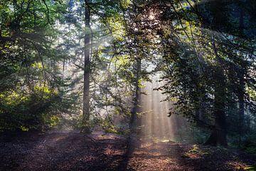 Zonnestralen in het Bos (2) van