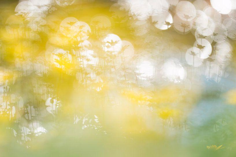 Knallend geel van Johannes Klapwijk