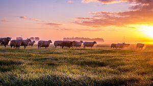 Schafe auf den Wiesen von sjaak vogel