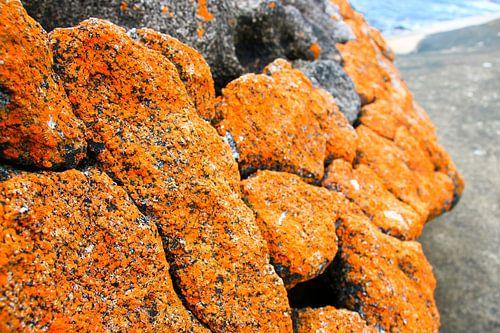 Oranje Korstmos: Tasmanië