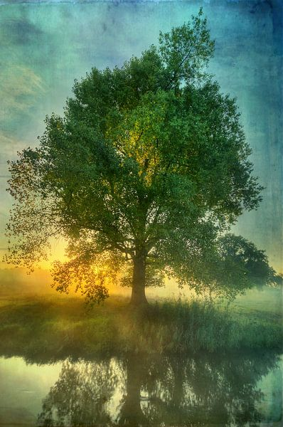 Digitaal - Als de zon op komt van Angelique Brunas