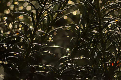Detail van een taxusplant met bokeh lichtcirkels