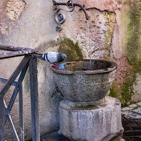 Drinkbak voor duiven van Ineke Huizing