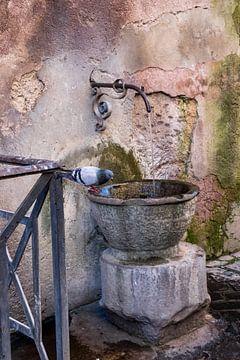 Tränkebecken für Tauben von Ineke Huizing