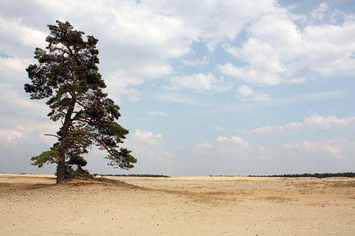 Eenzame boom van Sander de Jong